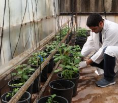 Daniel Meron:  Global food security in the shadow of Covid-19