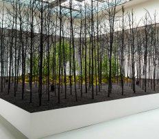 Ve vídeňské galerii vystavili 400 částečně spálených stromů jako pohled do budoucnosti